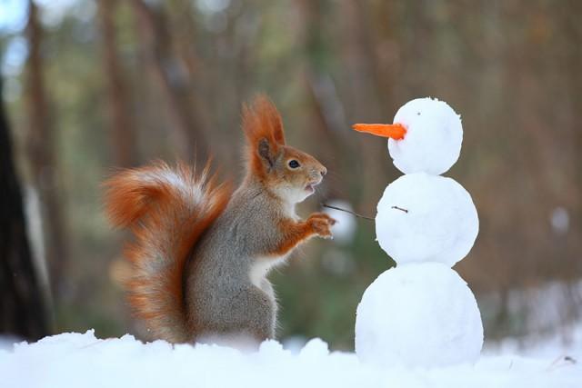 まるで人間みたい!雪やカメラで遊ぶ野生のリス