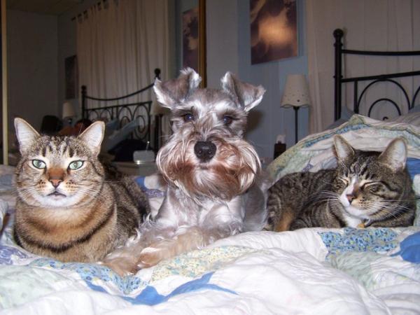 【面白画像】ベッドを占領したペットたち!