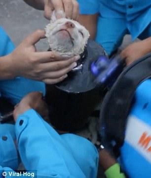 【動画】スチールパイプにすっぽりはまってしまった仔犬が救助される