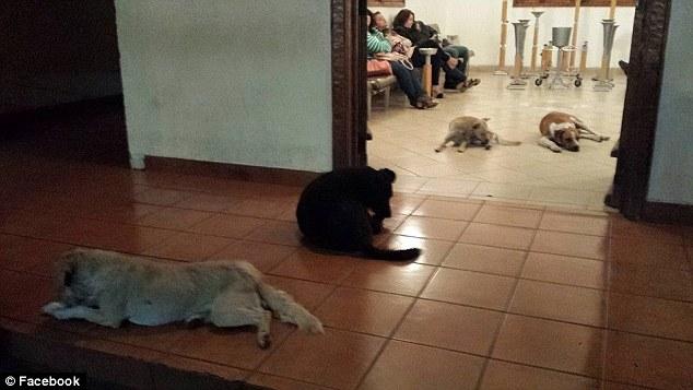 ホームレスの動物を世話してた女性の葬儀に野良犬が参列