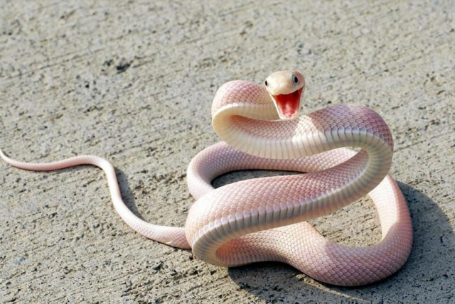 スマイル風のヘビ