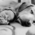 【癒し画像】大型犬が人間の赤ちゃんを見守る姿に心がとろける!