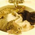 【画像】なぜだか洗面台のシンクが大好きなねこさん達