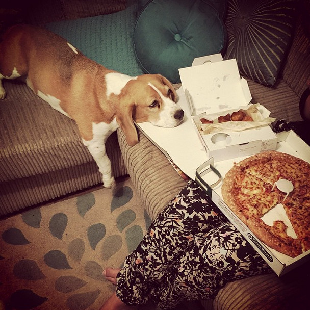 【面白画像】アメリカの犬と猫は人と同様ピザが大好き過ぎるようだ