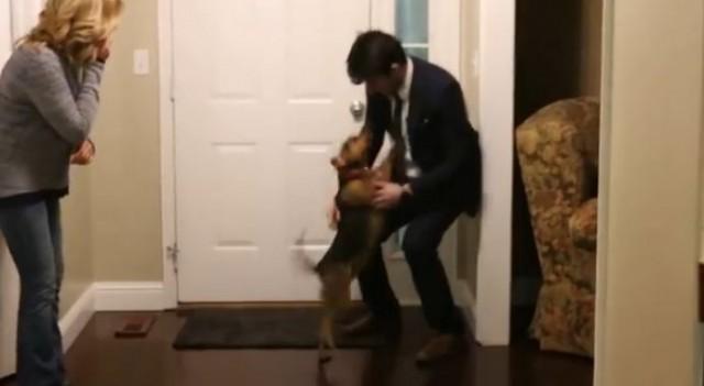 【感動動画】2年振りに実家に帰ってきた息子を犬がお出迎え