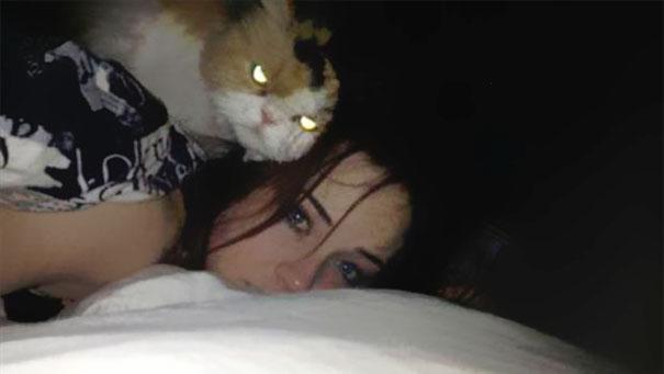 密かに飼い主の殺害を計画していると思われる猫達