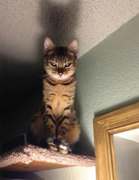 密かに飼い主を殺す計画を立てていると思われる猫達