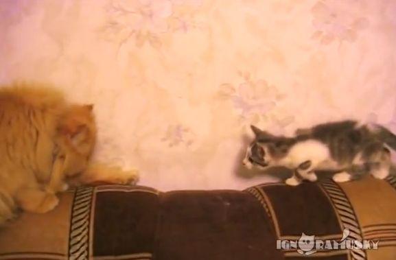 【面白動画】仔ねこが忍び足で先住ねこにお近づきしますが、、、
