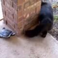 【癒し動画】「ねこさん待って~。」カメと猫の可愛い追いかけっこ