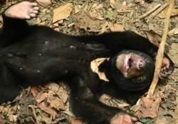 【画像】孤児の仔グマが初めて自然に触れた顔を見てわかる事