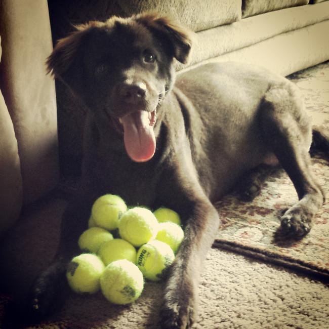 【面白画像】人生ってものを理解している犬達
