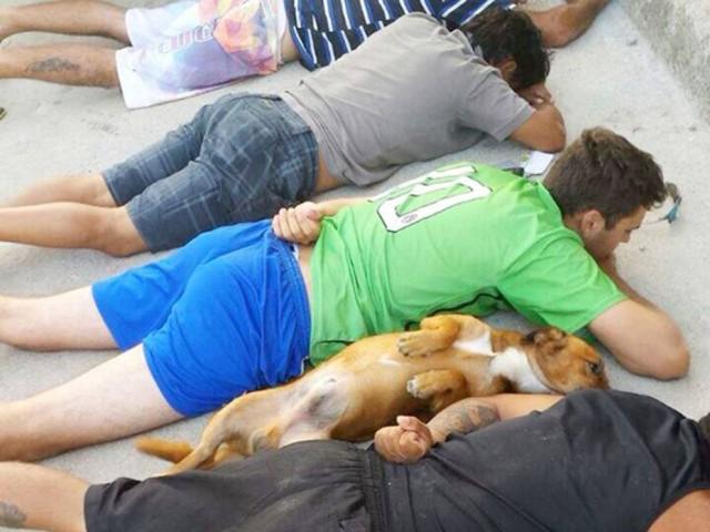 警察「動くな!全員床に伏せろ!」犬も飼い主と一緒に降参