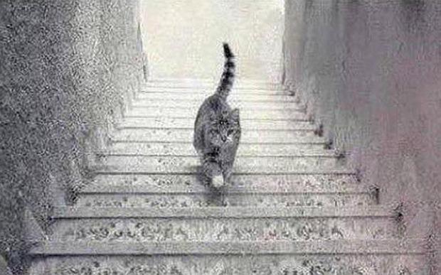 ドレスの色が青か白の次は猫が階段を昇っているか降りているか