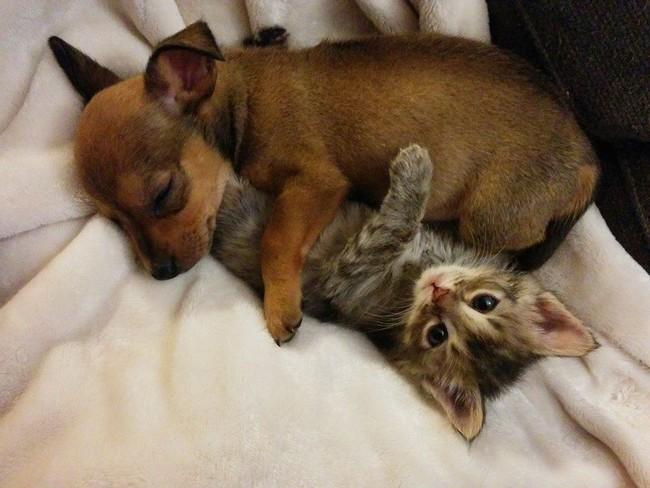 【画像】シェルターに持ち込まれた仔犬と仔猫が出会って親友になった