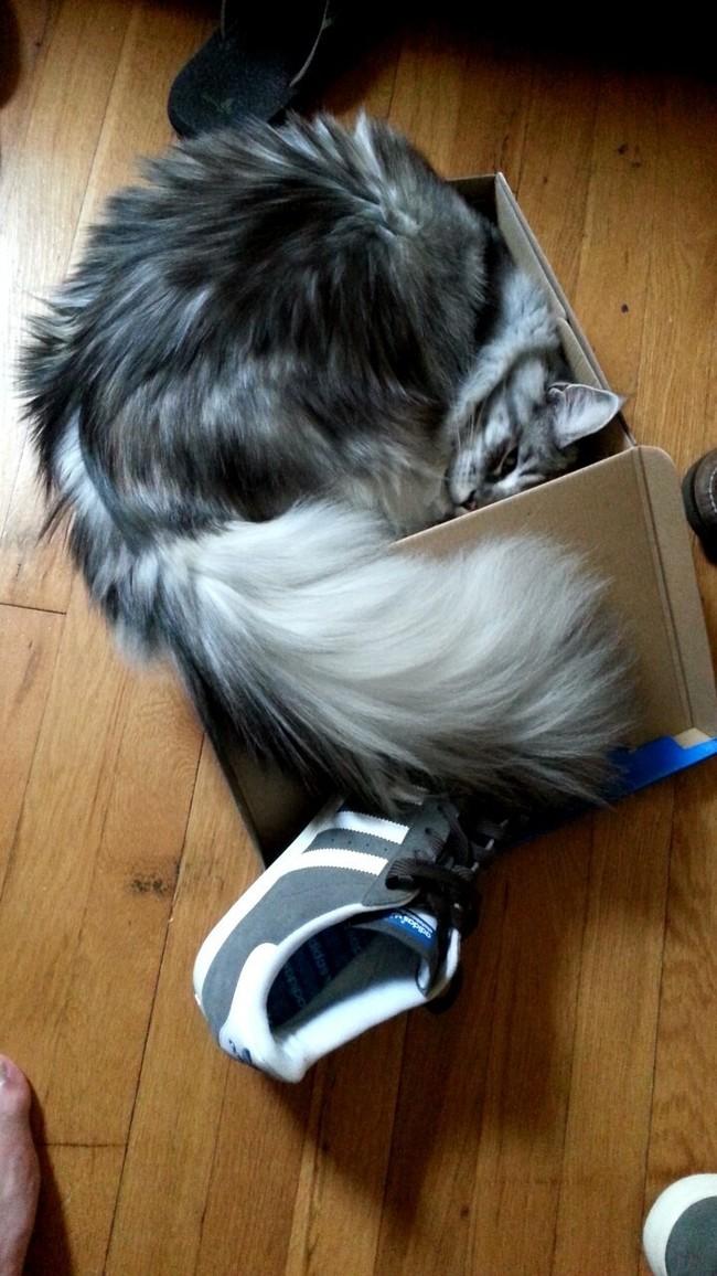 ねこはそこに箱があるならサイズは厭わず挑むのだ