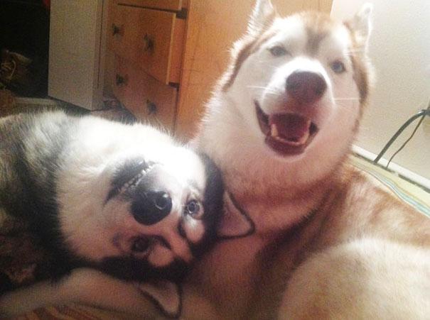 【画像】一人より二人の方が楽しいに決まってる!犬も同じ。