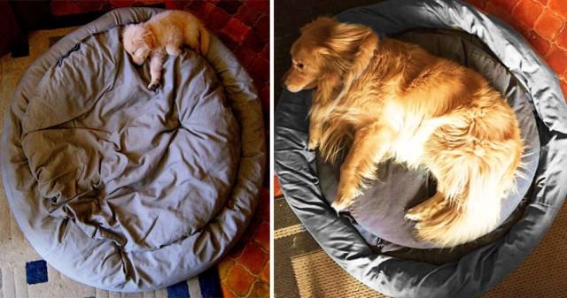 【画像】犬の成長・ビフォーアフター