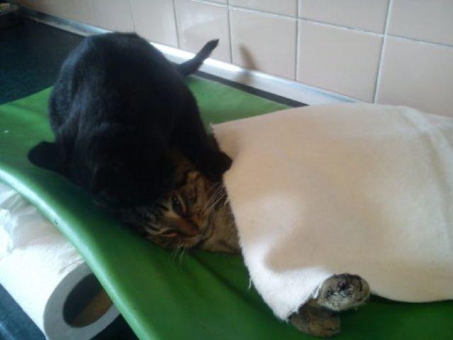 【画像】病気の動物を看護する心優しいねこ