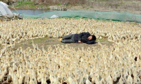【面白画像】眠くて眠くて仕方がない!エクストリームなお昼寝をする人達