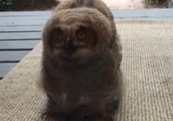 【動画】玄関開けたらフクロウの赤ちゃんがいた!何か言いたげにモソモソしていた