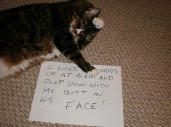 【画像】「私は罪を犯しました。」罪を公けにされるねこさん達