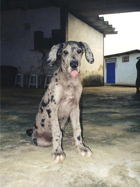ウルウル注意!ペットの初めての写真と最後の写真