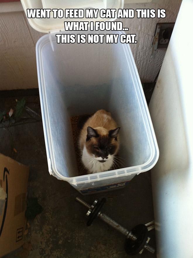 【面白画像】うちは猫を飼っていないんだけど。