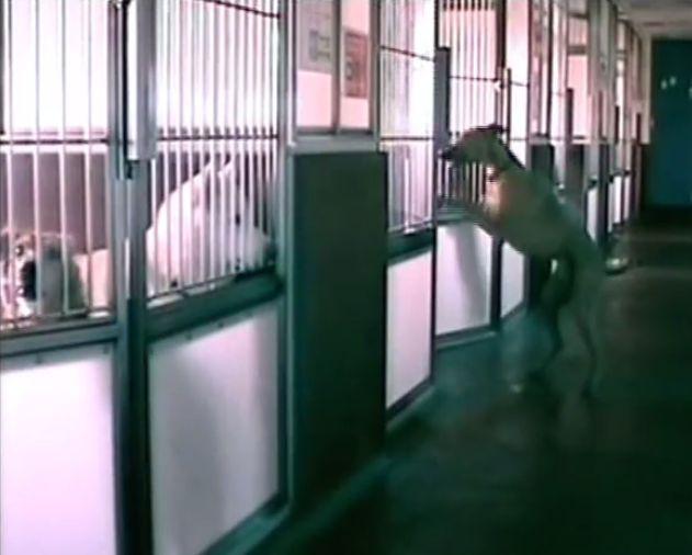 【動画】夜にシェルターの犬達の部屋のドアを開けているのは。。。