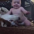【癒し動画】優しいハスキー犬と赤ちゃんは大の仲良し
