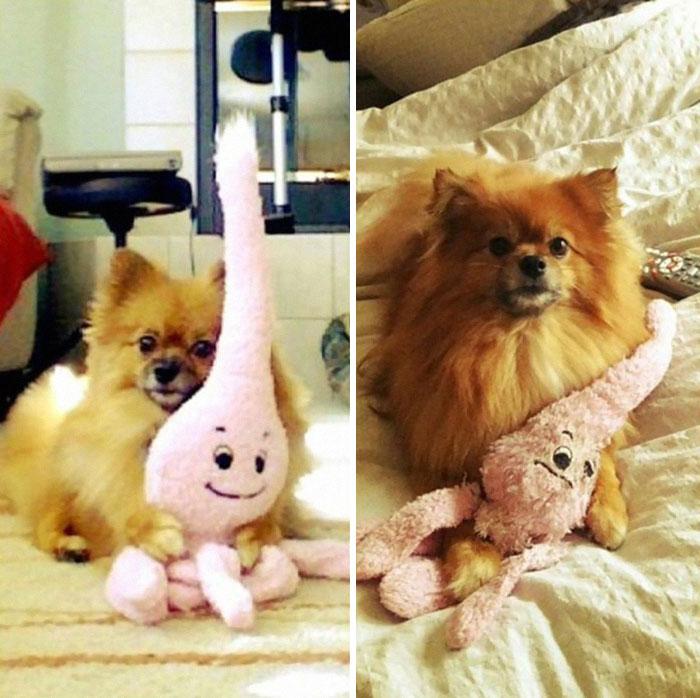【画像】お気に入りのおもちゃとペットの成長ビフォーアフター