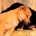 【面白動画】どうして我慢するの?睡魔と闘う犬とねこ達
