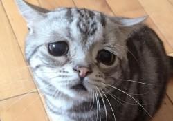 世界一悲しい顔をしたねこのルフさん