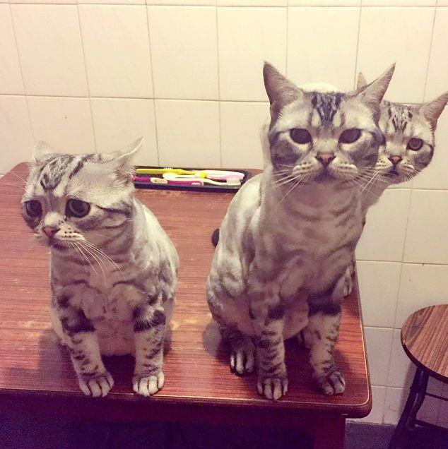 猫 ルフくん