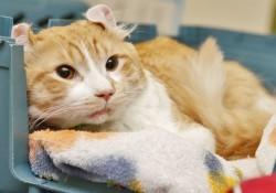 高速道路で怪我をしていた猫を助けたこの男性はヒーローだ!