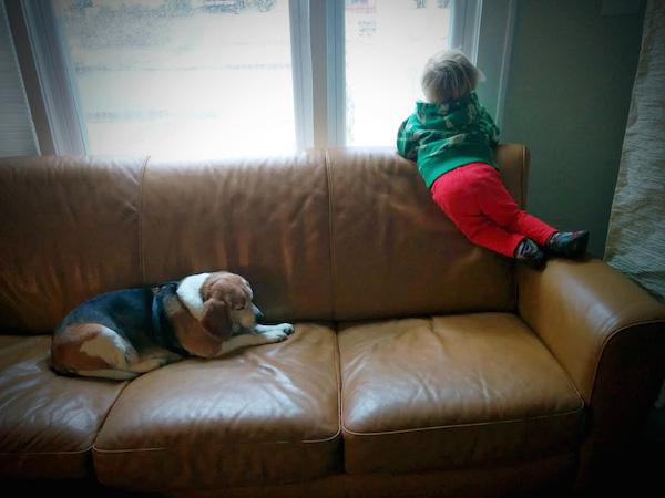 【感動ストーリー】天国の犬から3歳の男の子宛てに手紙が送られる