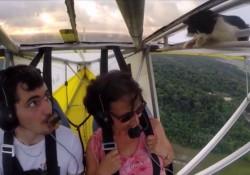【驚愕動画】空飛ぶ飛行機の羽にねこさんが!(イギリス)