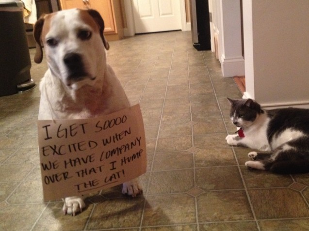 【面白画像】犬達の罪の告白書