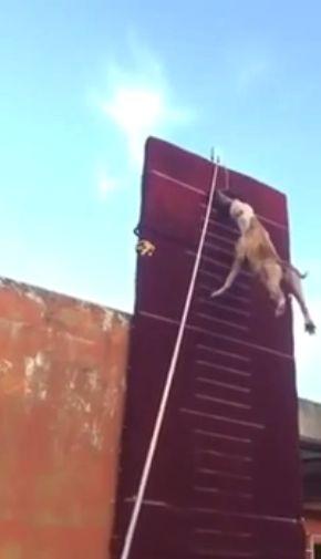 【驚愕動画】3.9メータージャンプする犬