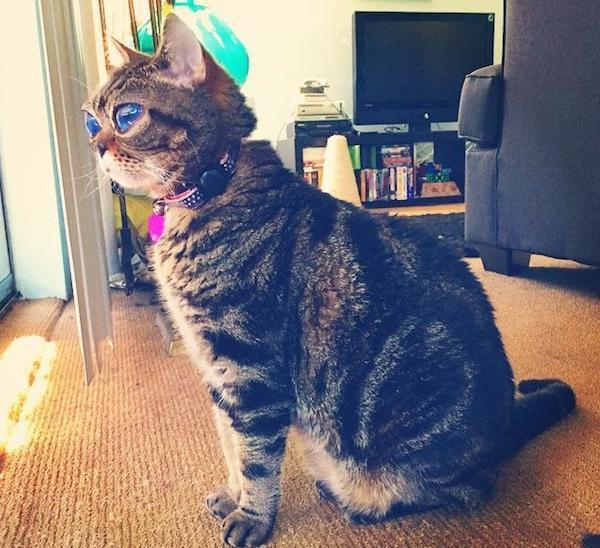 エイリアンのような大きな目を持つ猫のマチルダさん