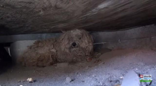 【動画】飼い主さんが亡くなり、家は売られ、飼い犬は捨てられた。。。