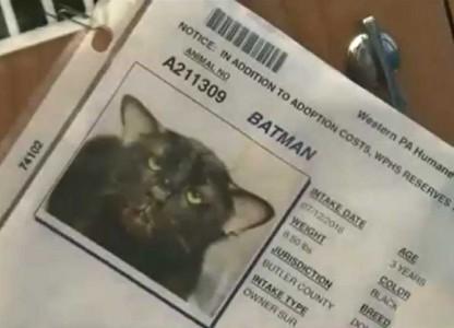 batmatcat2