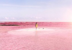 pink-lagoon1