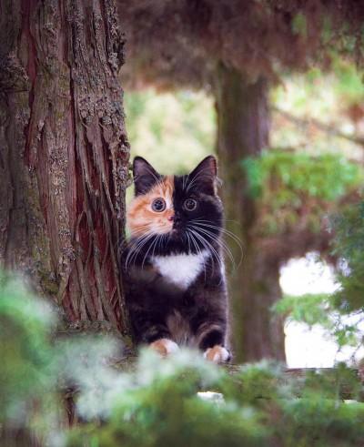 yanainthreforest